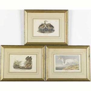 John james audubon american 17851851 three handcolored lithographs each framed each laiddown from the first royal octavo edition of the birds of america american woodcock plate 352 g