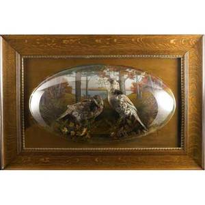 Victorian diorama of two taxidermied puffed grouse before a scenic background in oak frame with bubble glass ca 1900 36 x 48
