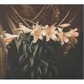 Margaretta k mitchell american b 1935 venetian lilies 1991 iris print signed dated titled and numbered 49100 19 14 x 20 sheet
