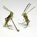 Cold painted vienna bronzes two grasshoppers playing golf with celluloid wings 20th c taller 3