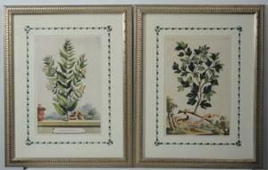 Pair of HandColored Botanical Engravings