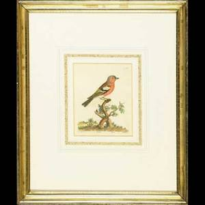 Five 19th c botanical engravings two pairs with botanical subjects framed and a handcolor bird engraving framed largest 14 x 20