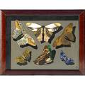 Richard blow montici pietra dura with butterflies framed montici cipher in frame 8 12 x 10 12