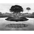 Jerry uelsmann american b 1934 floating tree 1969 gelatin silver print framed signed and dated 9 78 x 12 38 sight provenance private collection