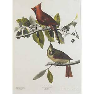 Bird engravings eleven works of art 19th20th c seven german color lithographs each 10 x 13 two american color engraving book plates each 7 x 9 12 two aubudon society restrikes of james a