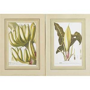 19th c botanical engravings fifteen handcolored botanical engravings with handlined mats 15 x 9 plate size along with offset lithographs calendar prints and advertising prints of birds and