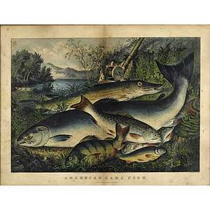 Currier  ives american 19th c handcolored lithograph american game fish framed 19 12 x 27 34 plate