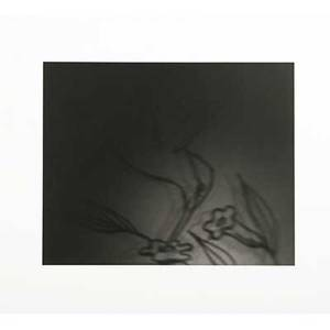 Barbara ess american b 1948 untitled 1996 gelatin silver print signed and numbered 2025 8 34 x 7 18 image 15 14 x 13 18 sheet provenance private collection new york