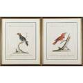 Italian school two etchings of wild birds 18th c framed each 20 12 x 17
