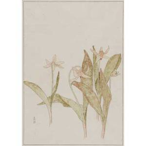 Edna walker american b 1880 botanical study dogtooth violets byrdcliffe 1905 watercolor and ink on paper matted and framed provenance property of a private delaware collector exhibitio