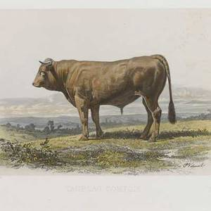 Animal prints four works of art 19th c french bovine and three bird prints largest 18 12 x 21 12