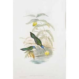 John gould english 18041881 four handcolored lithographs of hummingbirds by gould h c richter and william hart framed from a monograph of the trochilidae or family of hummingbirds lond