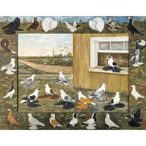 M frank cook american 20th c oil on canvas some favorite breeds of pigeons painted folk art frame signed 28 x 40 14 accompanied by three black and white photographs of his work