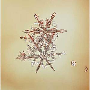Mike and doug starn american b 1961 snowflake 200509 archival inkjet on paper signed from an edition of 50 16 x 16 sheet provenance private collection new york