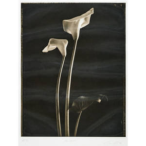 Tom baril american b 1952 two callas 1998 photogravure framed signed dated titled and numbered ap 47 23 58 x 19 34 sight provenance private collection florida