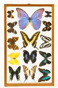 A Collection of Moth and Butterfly Specimens