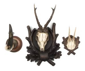 Two Taxidermy Skull Mounts