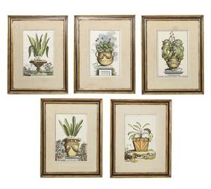 Five Hand Colored Engravings Abraham Munting
