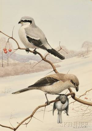 Earl Lincoln Poole American 18911972 Birds of Prey