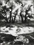 Jerry Uelsmann American b 1934 Untitled