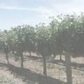 Montille Corton Charlemagne 2012 6 bottles oc