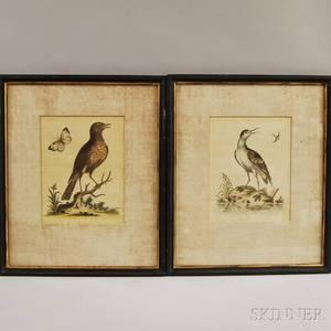 Two Framed George Edwards 16941773 Ornithological Prints