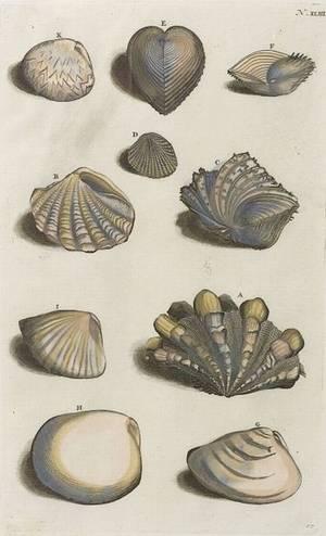Set of Eight Framed Handcolored Engravings of Seashells
