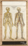 American Frohse Anatomical Chart