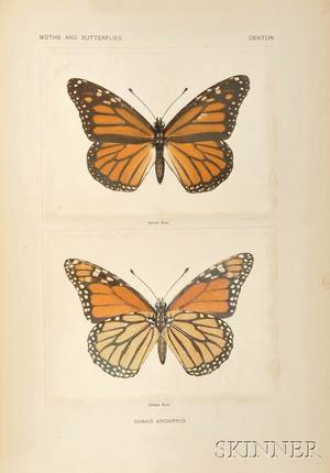 Denton Sherman F fl circa 1900 Moths and Butterflies of the United States