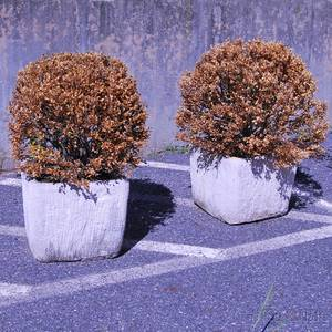 Pair of Square Concrete Garden Planters