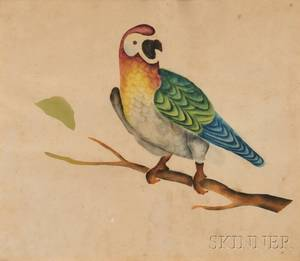 American School 19th Century Portrait of a Parrot Perched on a Tree Branch