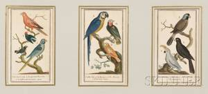 French School 19th Century Three Handcolored Engravings of Birds in a Common Frame