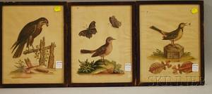Three Framed George Edwards Handcolored Engraved Bird and Insect Prints