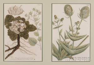 British School 19th Century Four Botanical Prints in Two Frames