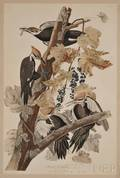 Audubon John James 17851851