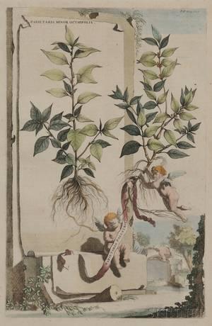 After Abraham Munting Dutch 16261683 Eight Framed Botanical Prints