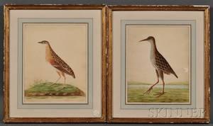 British School 19th Century Two Wading Birds