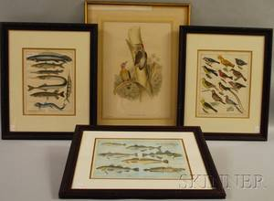 Four Framed Handcolored Bird and Fish Prints
