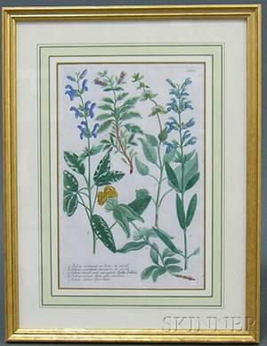 Pair of Continental Handcolored Botanical Engravings