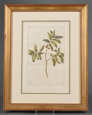 Group of Eight Dutch Handcolored Botanical Engravings