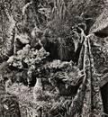 Marie Cosindas American b 1925 Still Life with Flowers