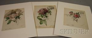 Attributed to Gustave Fraipont French 18491923 Lot of Three Studies of Roses Mousseuse Salet Capitaine Christy