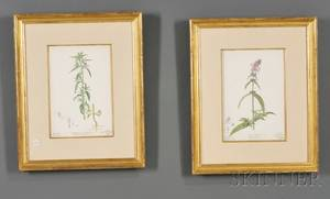 Pair of Framed English Watercolor and Ink Botanical Studies
