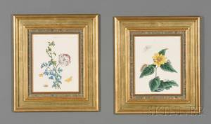 Four Framed Handcolored Engravings of Moths and Butterflies