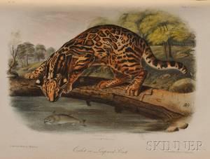 Audubon John James 17851851 The Quadrupeds of North of America
